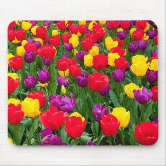 Mousepad rojo, púrpura, amarillo del tulipán