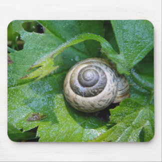Mousepad snail on sheet with water droplets