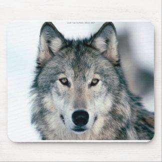 Mousepad solitario del lobo gris