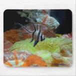 mousepad - tropical fish