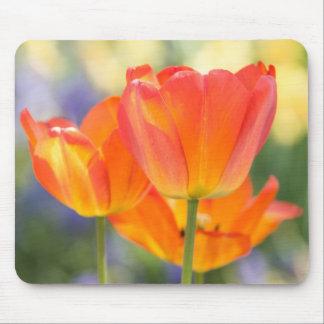 mousepad - tulips (orange)