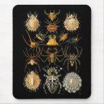 Mousepad Vintage Artist Ernst Haeckel Arachnida Mousepads