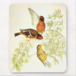 Mousepad Vintage Spectacled Finch Birds