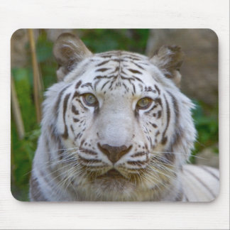 Mousepad - White Bengal Tiger