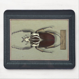 Mousepad with Goliath beetle