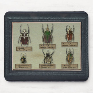 Mousepad with Goliath beetles