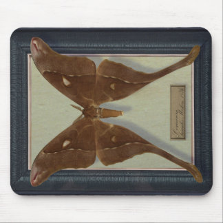 Mousepad with Saturnidae moth