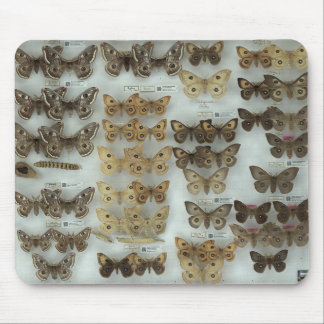 Mousepad with Saturniidae butterflies