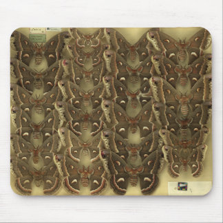 Mousepad with Saturniidae moths