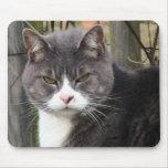 mousepads enojados del gato tapetes de ratón