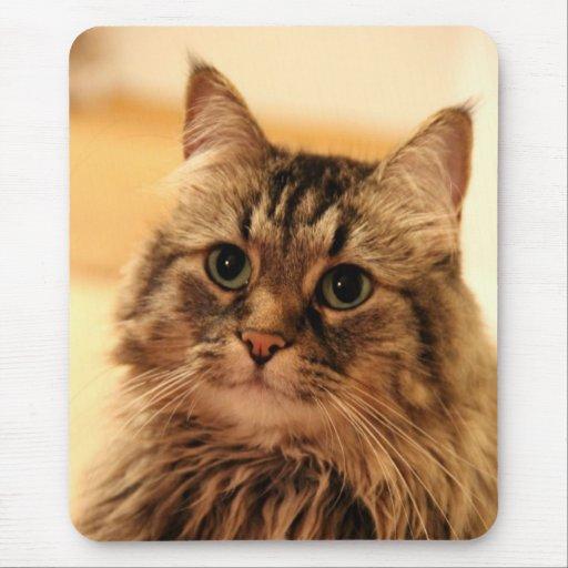 Mousepads largos de los regalos de los gatos del p alfombrillas de ratón