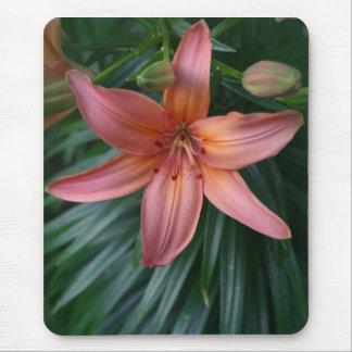 Mousepads rosados de la fotografía de la flor del