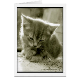 Mouser Grooming  Card