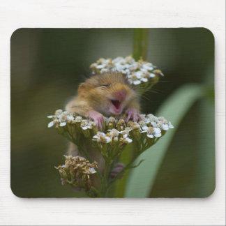 Mousie sonriente en la flor alfombrillas de raton