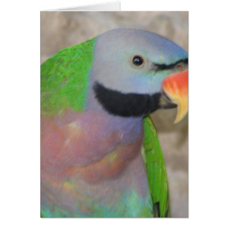 Moustached Parakeet Card