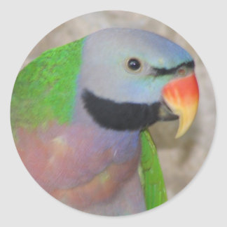 Moustached Parakeet Classic Round Sticker