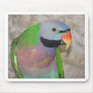 Moustached Parakeet Mouse Pad