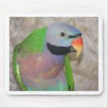 Moustached Parakeet Mousepad