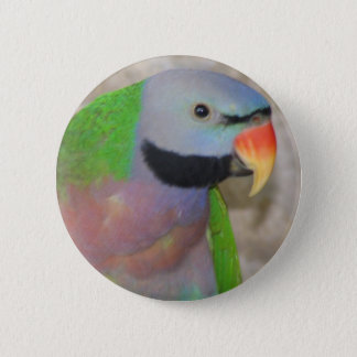 Moustached Parakeet Pinback Button