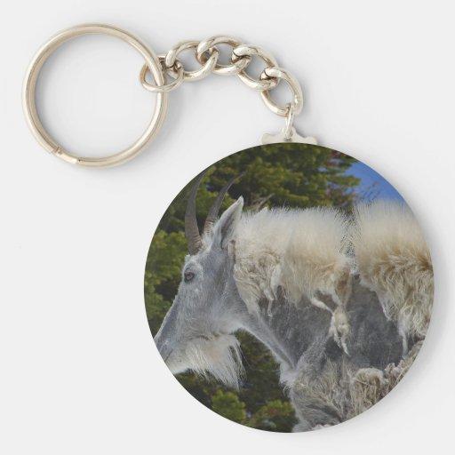 Moutain Goat In Glacier Park Key Chain