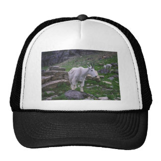 Moutain Sheep Trucker Hat