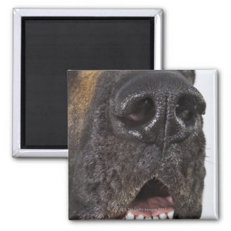 Mouth of Great Dane, close-up 2 Inch Square Magnet