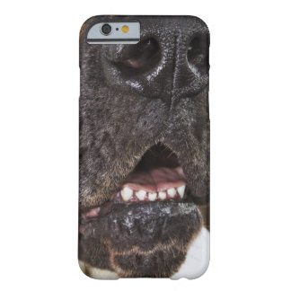 Mouth of Great Dane, close-up Barely There iPhone 6 Case