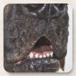 Mouth of Great Dane, close-up Drink Coaster
