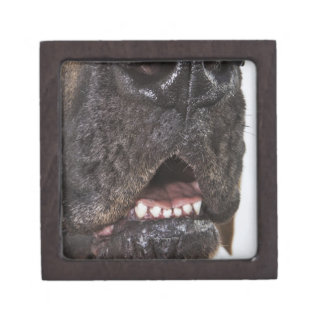 Mouth of Great Dane, close-up Gift Box