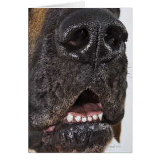 Mouth of Great Dane, close-up Greeting Card