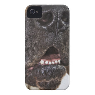 Mouth of Great Dane, close-up iPhone 4 Case
