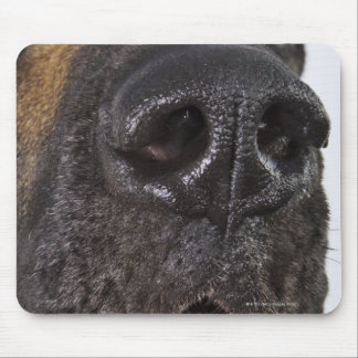 Mouth of Great Dane, close-up Mouse Pad