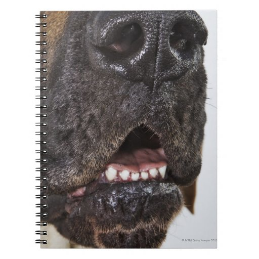Mouth of Great Dane, close-up Notebook
