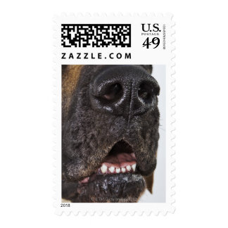 Mouth of Great Dane, close-up Postage Stamp