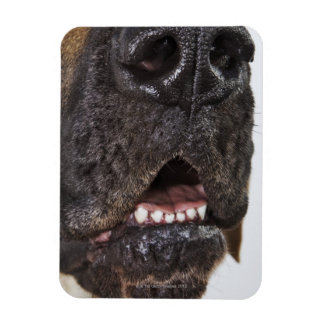 Mouth of Great Dane, close-up Rectangle Magnets