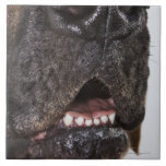 Mouth of Great Dane, close-up Tile