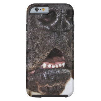 Mouth of Great Dane, close-up Tough iPhone 6 Case