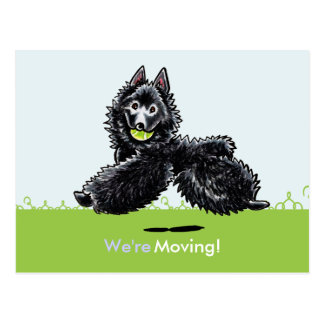 Moved Moving Schipperke New Address Announcements Post Cards
