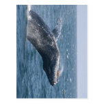 Mover de un tirón la ballena