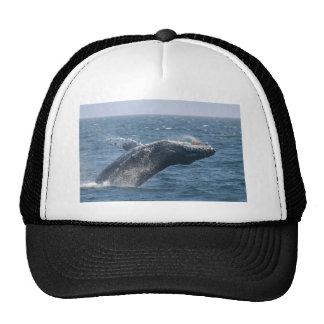 Mover de un tirón la ballena gorras