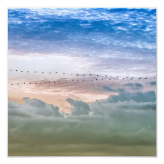 Moving Forward Bird Migration Team Inspiration Photograph