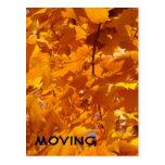 MOVING postcards Alerts Orange Leaves Moved
