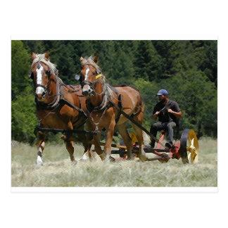 Mowing Hay Postcard