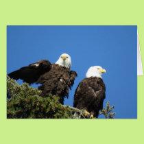 Mr and Mrs Bald Eagle Card