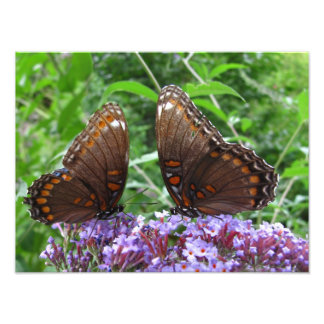 Mr and Mrs Butterfly ~ Photo