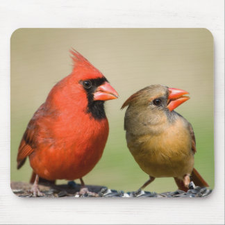 Mr. and Mrs. Northern Cardinal Mouse Pad