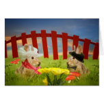 Mr. and Mrs. Rabbit Greeting Cards