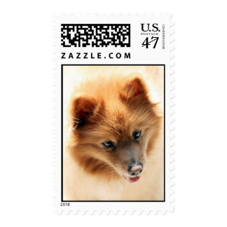 Mr Andy Pure Pomeranian Postage