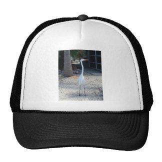 Mr. Bird Trucker Hat