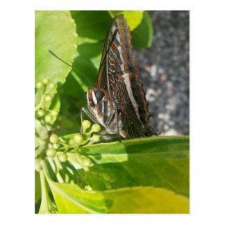 Mr Butterfly Postcard